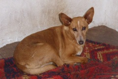 Patenhund-Poldi1