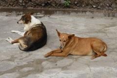 Patenhund-Poldi2