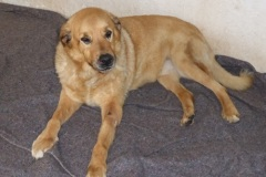 Patenhund-Gordi1