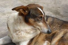 Patenhund-Poldi1-neu