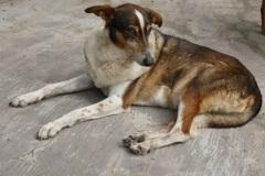 Patenhund-Poldi2-neu
