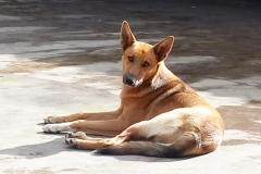 Tierschutz-Garafia-Luisito