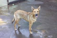 Tierschutz-Garafia-Luisito1