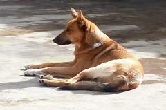 Tierschutz-Garafia-Luisito2