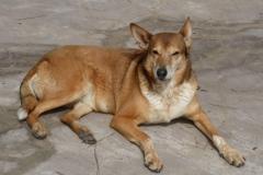 Patenhund-Tayra2